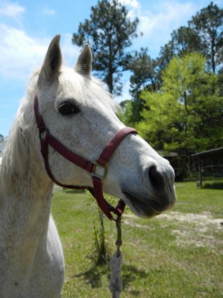 azalea-ponies-6-768x1024-103.jpg