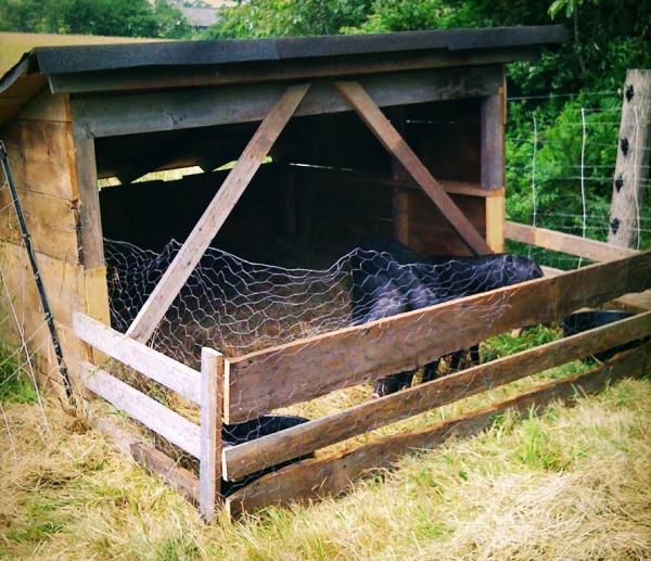 shelter-3-130.jpg