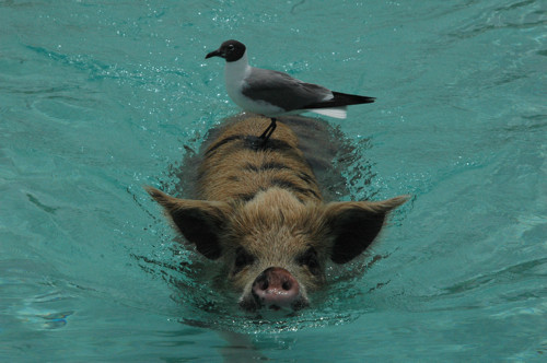 swim-1-106.jpg